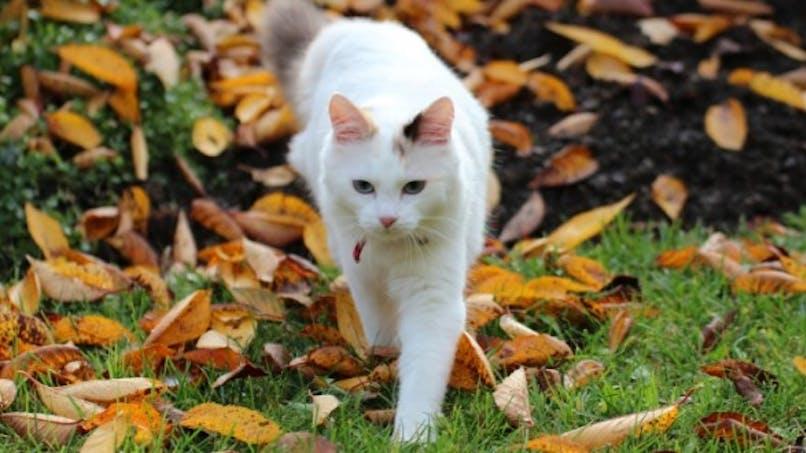 Quelle plante dangereuse pour mon chat?