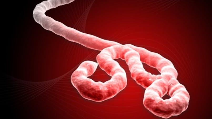 Virus Ebola: après la Guinée, cas suspects au Liberia