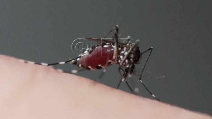 Journée mondiale de la santé: ces insectes qui infectent les hommes