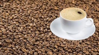 Maladie d'Alzheimer:  boire du café est bénéfique