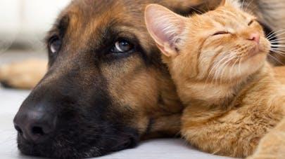 Les animaux reconnus dans le Code civil comme des êtres sensibles