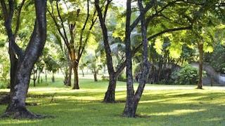 Interdiction des pesticides dans les espaces verts en 2016