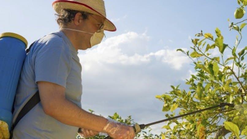 Contre les insectes ou les mauvaises herbes, utilisez-vous des pesticides?