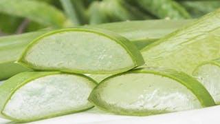 L'aloe vera soigne les coups de soleil, la constipation ou les brûlures d'estomac