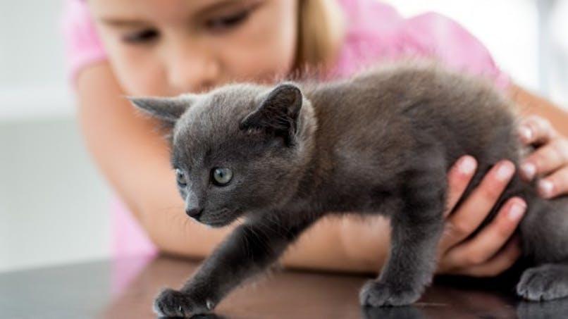 Quel animal  pour mon enfant?