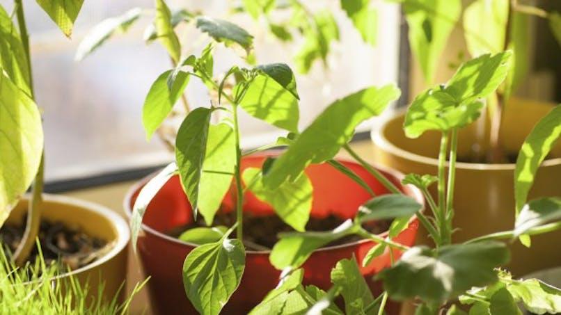 Les plantes au bureau améliorent le bien-être et la productivité
