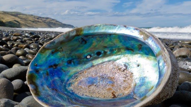 L'herpès bientôt guéri par le sang de mollusques marins