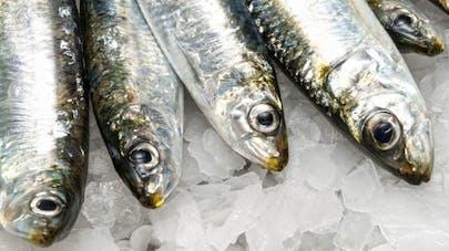 La sardine, c'est bon pour le cœur!