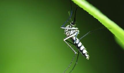 Quel traitement préventif contre le paludisme ?