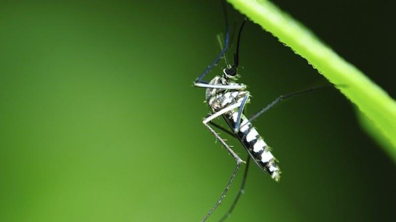 Quel traitement contre le paludisme?