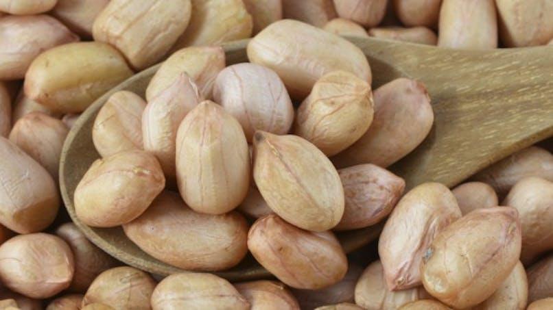 Les cacahuètes grillées favorisent plus l'allergie