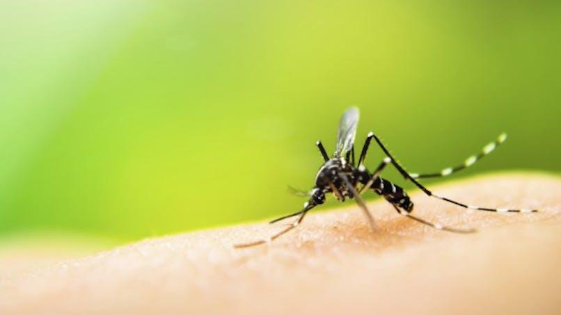 4 cas autochtones de chikungunya à Montpellier