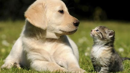 """Les animaux sont officiellement devenus des """"êtres sensibles"""""""