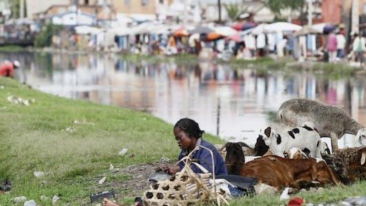 Epidémie de peste à Madagascar: mise en garde de l'OMS