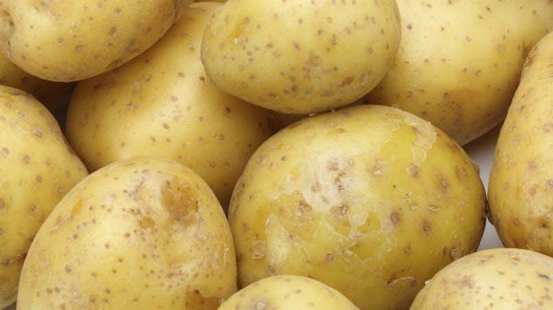 Contre l'obésité, bientôt un complément alimentaire à la pomme de terre?