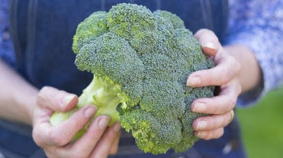 De l'extrait de brocoli pour prévenir les cancers ORL