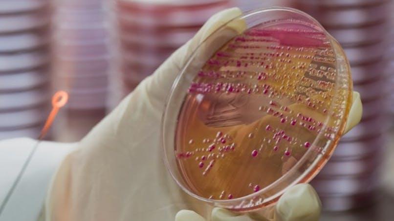 Diagnostic: programmer les bactéries comme des ordinateurs