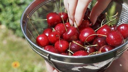 Allergie au pollen: attention aussi aux aliments!