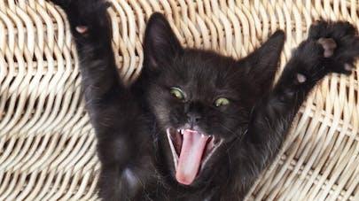 Regarder des vidéos de chats pour booster son moral