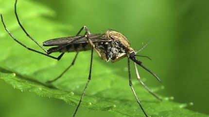 Paludisme: Microsoft travaille sur un drone antimoustiques