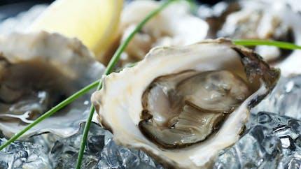 Pourquoi manger des huîtres augmente le risque de gastro-entérite