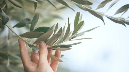 Trois plantes qui protègent le cœur