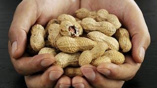 Un patch, futur traitement de l'allergie à l'arachide?