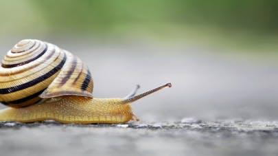 Santé : les bienfaits inattendus de la bave d'escargot | Santé ...
