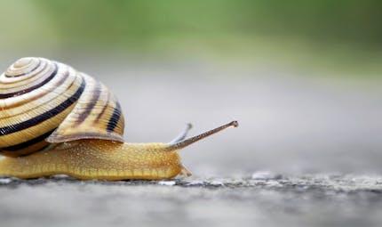 Santé: les bienfaits inattendus de la bave d'escargot