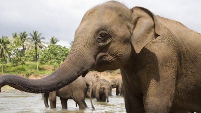 Pourquoi les éléphants n'ont-ils pas de cancer?