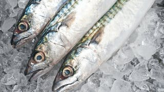 Pollution des eaux: peut-on encore consommer du poisson?