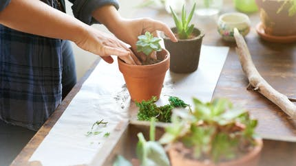 3 bonnes raisons de se mettre au jardinage
