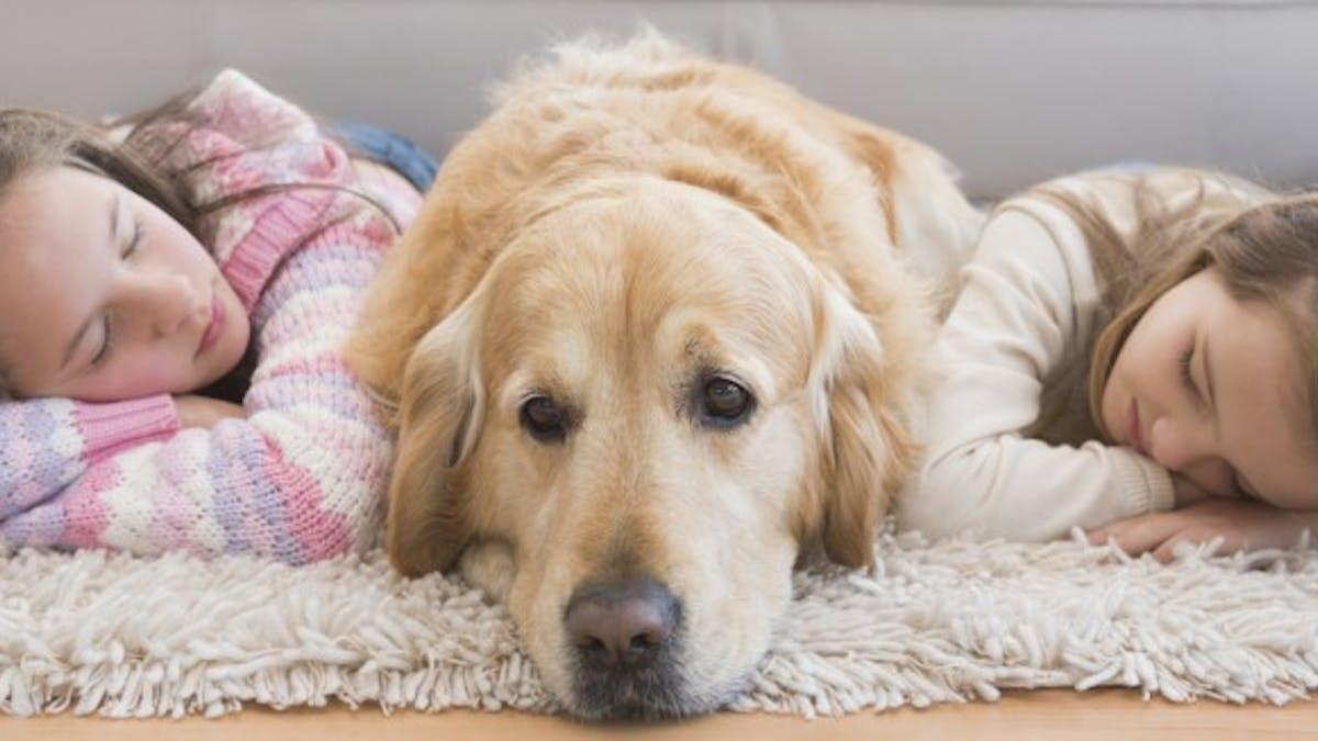 Enfant: un chien à la maison réduit l'anxiété