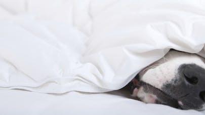 Dormir avec son animal de compagnie, bonne ou mauvaise idée?