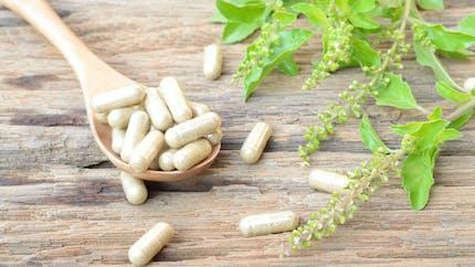 Douleur: les plantes qui aident à réduire les anti-inflammatoires
