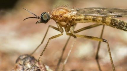 Le virus Zika se transmet par voie sexuelle