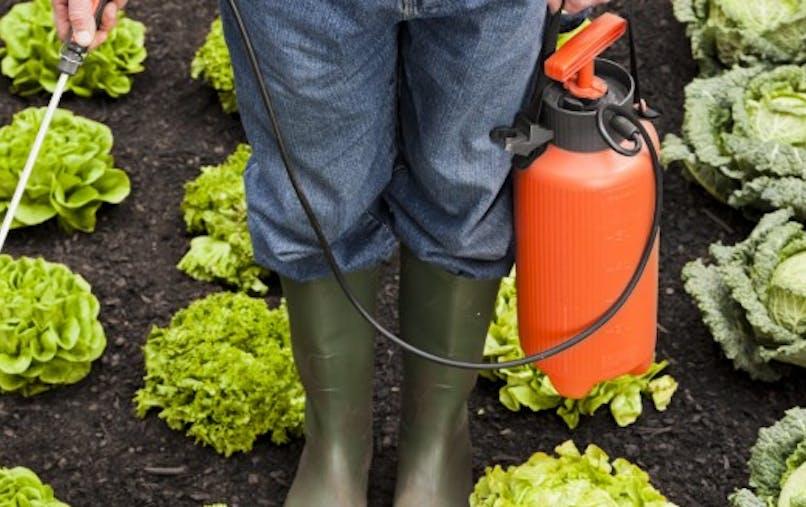 Pesticides: le glyphosate obtient un sursis