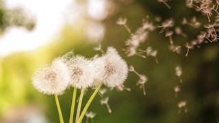 Allergies: les meilleures applications pour traquer le pollen