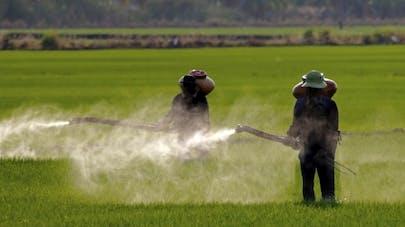 Pesticides: une carte interactive pour visualiser les victimes