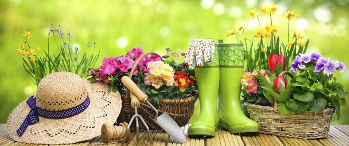 Comment Eloigner Les Moustiques Du Jardin Sante Magazine