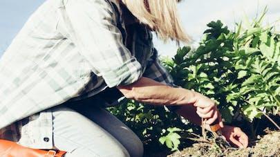 Glyphosate: pourquoi cet herbicide inquiète-t-il?