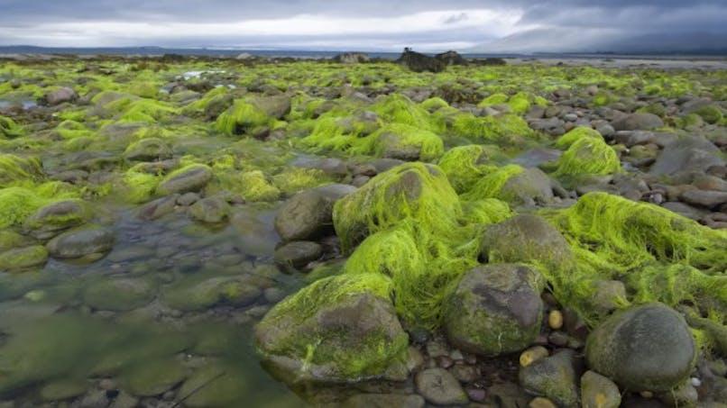 Comment se protéger des algues vertes