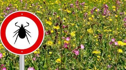 Maladie de Lyme: un plan d'action national pour venir en aide aux malades
