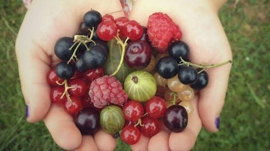 Cinq fruits rouges et leurs bienfaits