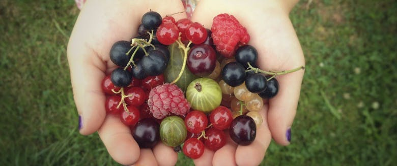bienfait des fruits rouges