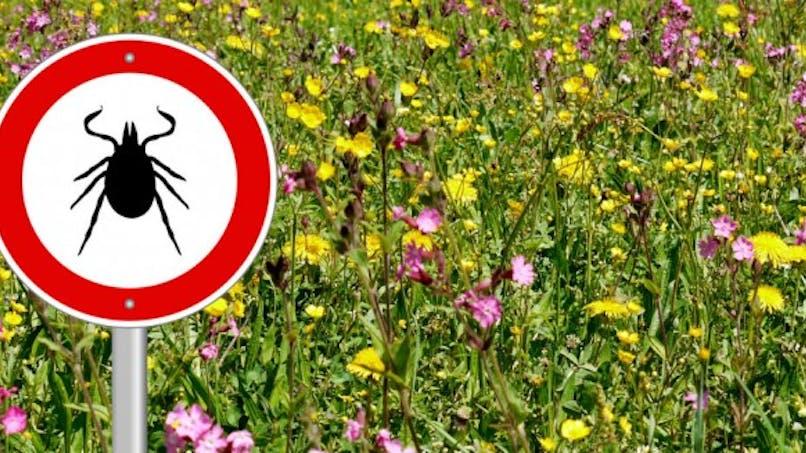 Maladie de Lyme: mieux connaître les zones à risque avec une carte interactive