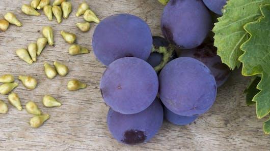 Tous les bénéfices de l'extrait de pépins de raisins