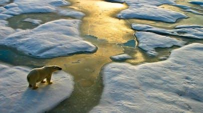 4 maladies liées au réchauffement climatique