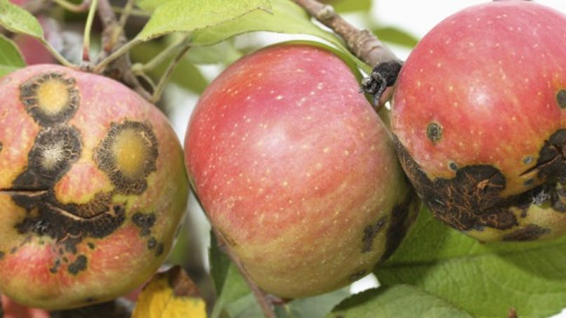 Tout savoir sur les fruits et légumes