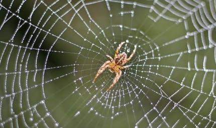 Vaincre la peur des araignées: de nouvelles avancées de la science